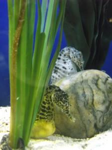 Blue Planet Aquarium, Ellesmere Port