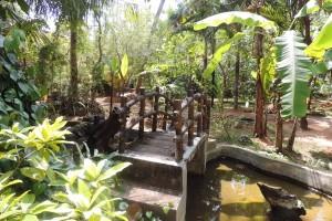 Spice & Herbal Garden